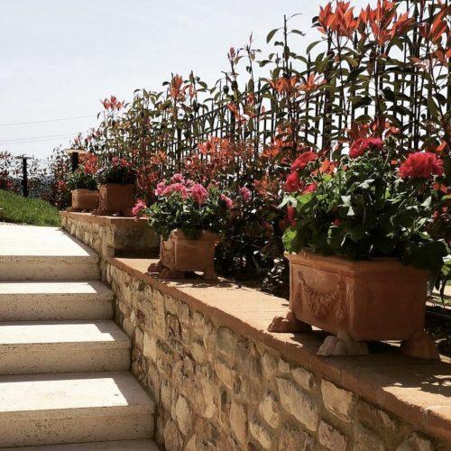 terakota kvetinace nizke